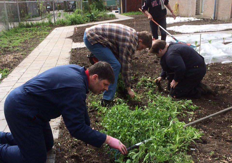 Vrijwilligers helpen in de moestuin