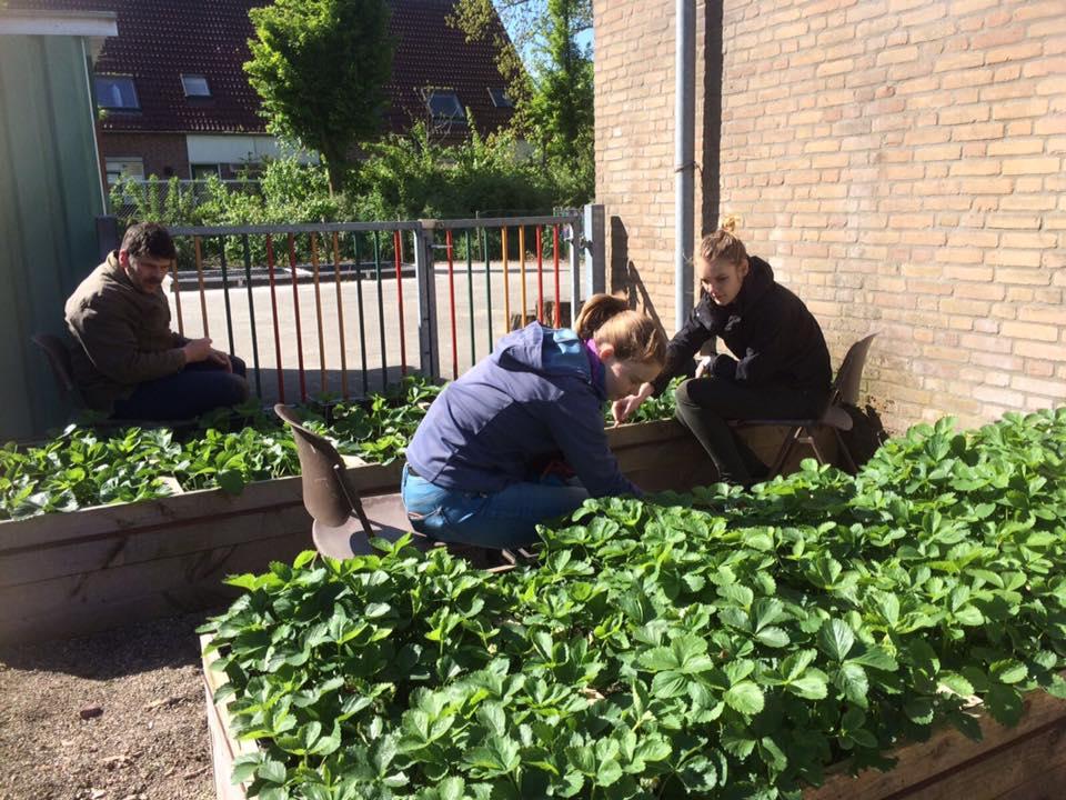 Vrijwilligers van de Kinderboerderij helpen Klokketoren
