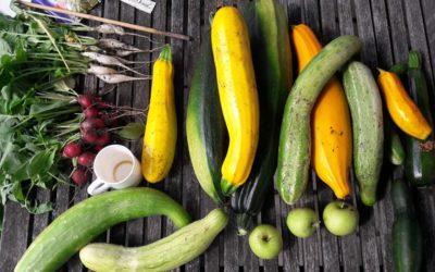 Verse oogst uit de tuin op het bord