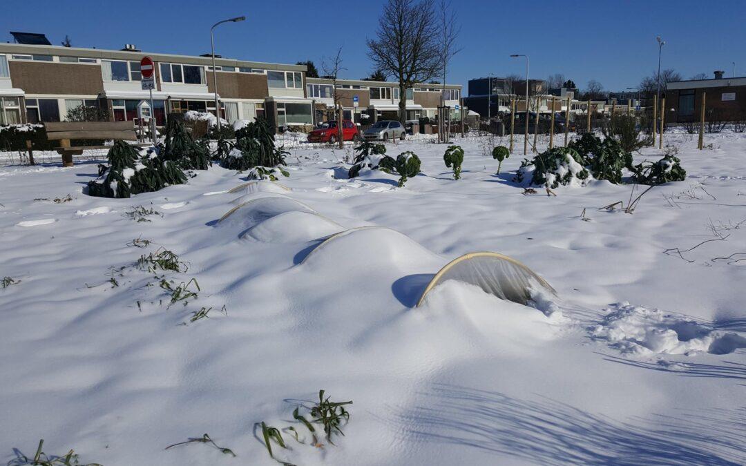 Groene Schakel in de sneeuw